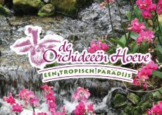 Excursie Luttelgeest Orchideeën Hoeve